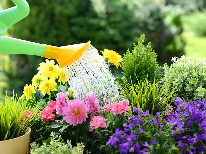 Watering a flower garden